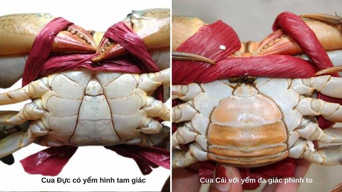Thời điểm nào cua chắc thịt? Cua biển làm món gì ngon? 4