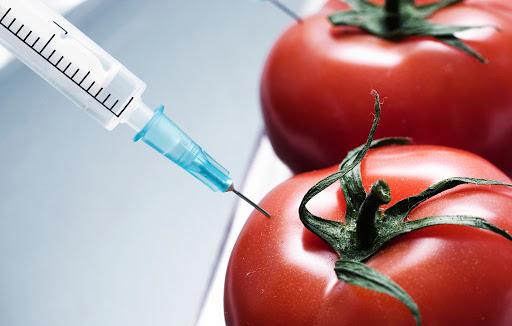 Thực phẩm biến đổi gen là gì? 2