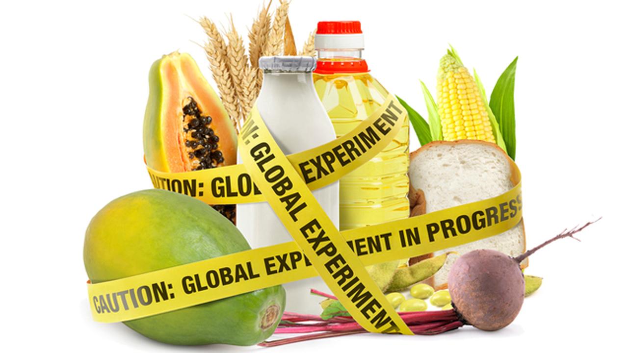Thực phẩm biến đổi gen là gì? 7