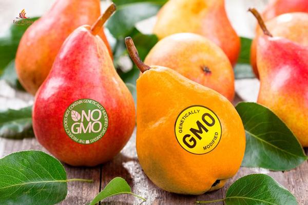 Thực phẩm biến đổi gen là gì? 5