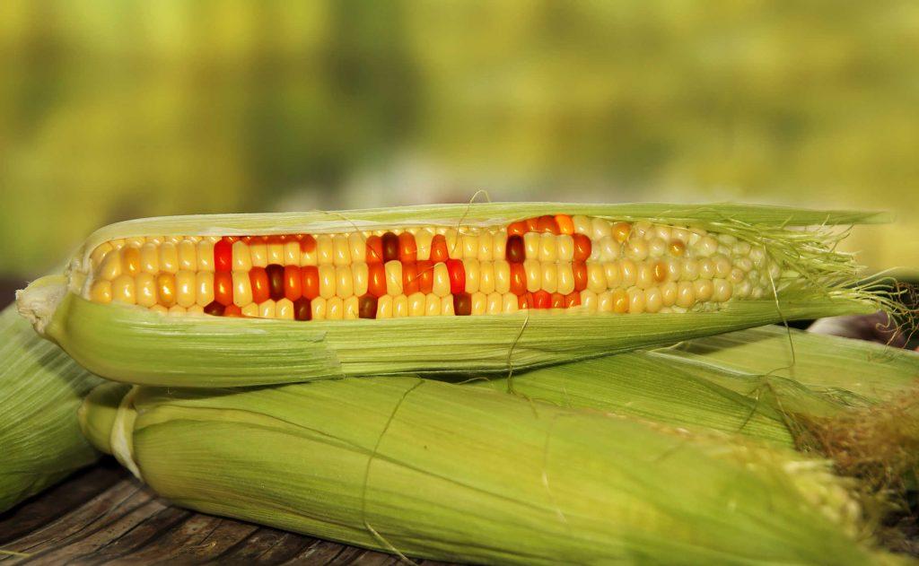 Thực phẩm biến đổi gen là gì? 4