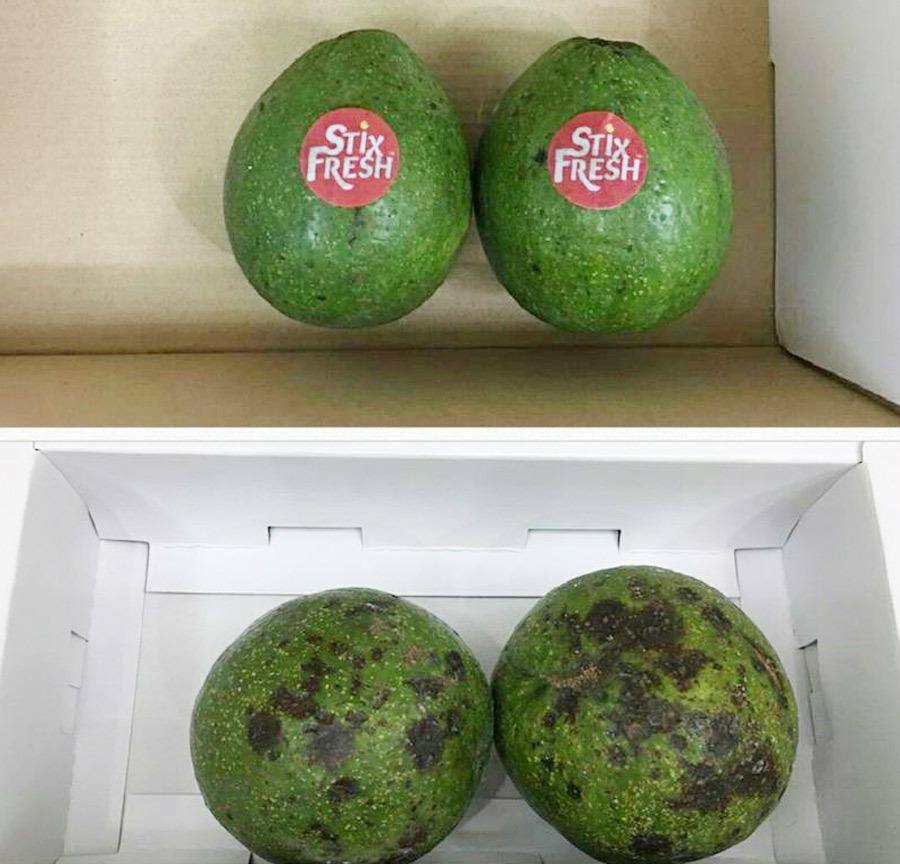 Stixfresh - miếng dán giữ trái cây tươi lâu hơn 14 ngày 2